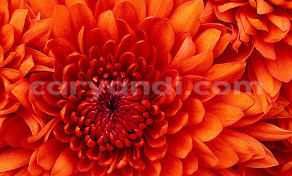 Medium with watermark 3417801308 0a1104d840 z