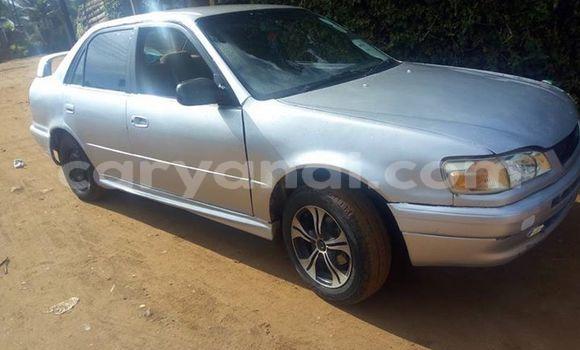 Buy Used Toyota Corolla Silver Car in Kitwe in Zambia