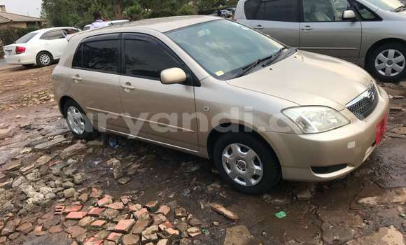 Buy New Toyota Runx Beige Car in Lusaka in Zambia